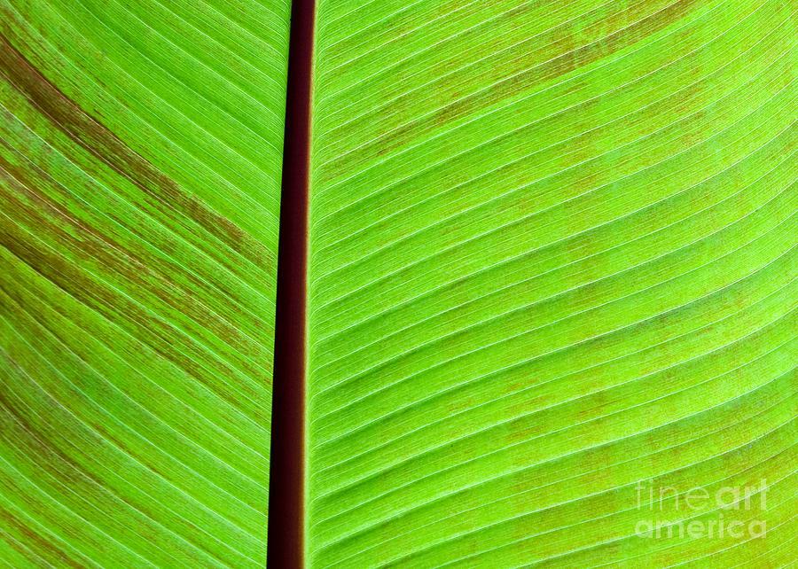 Green Photograph - Green Lines by Sabrina L Ryan