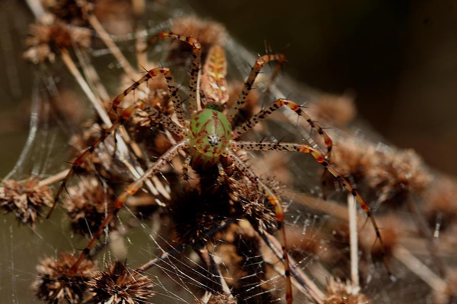 Peucetia Viridans Photograph - Green Living by Sean Green