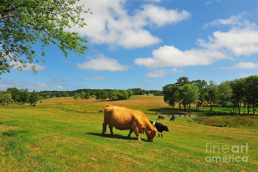 Farms Photograph - Green Pasture by Catherine Reusch Daley