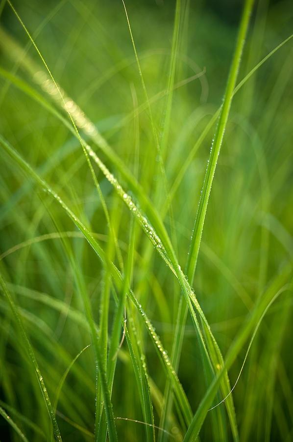 Prairie Photograph - Green Prairie Grass by Steve Gadomski