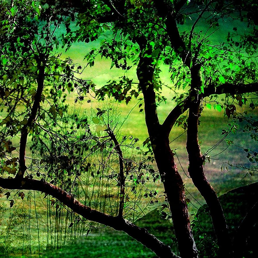 Nature Photograph - Green by Shirley Sirois