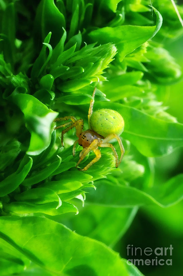 Hdr Photograph - Green Spider 2.0 by Yhun Suarez