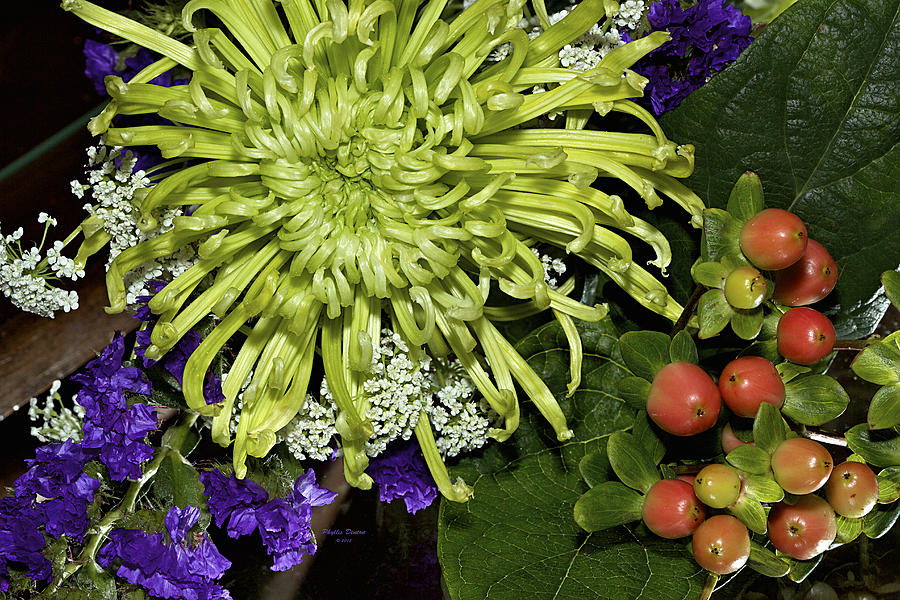 Flowers Photograph - Green Spider Mum by Phyllis Denton
