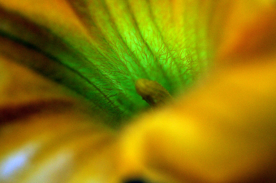 Squash Flower Photograph - Greener On The Other Side by Wanda Brandon
