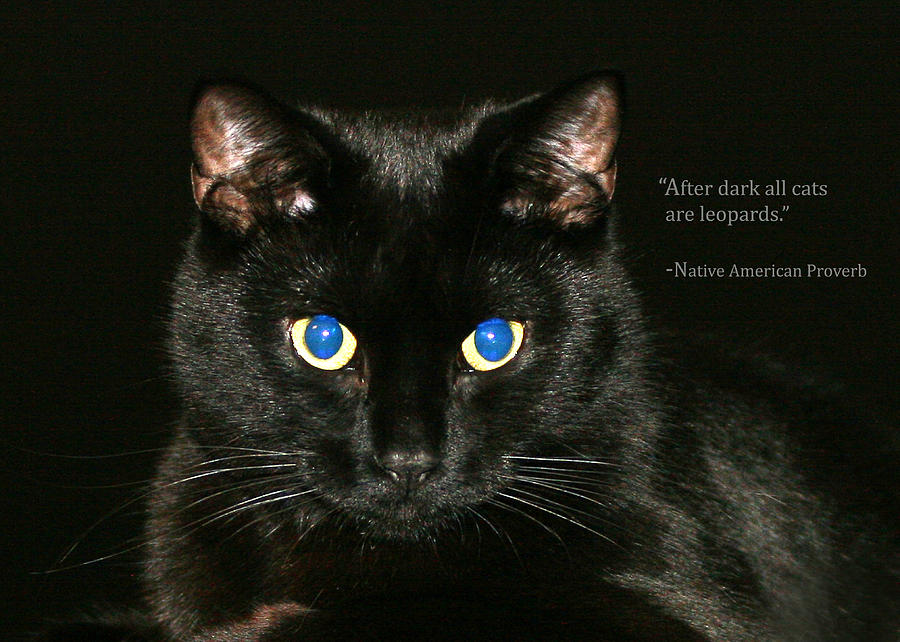 Cats Photograph - Greeting Card-midnight by Sarah  Lalonde