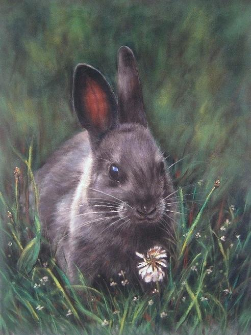 Wildlife Pastel - Grey Bunny by Rose Baggs