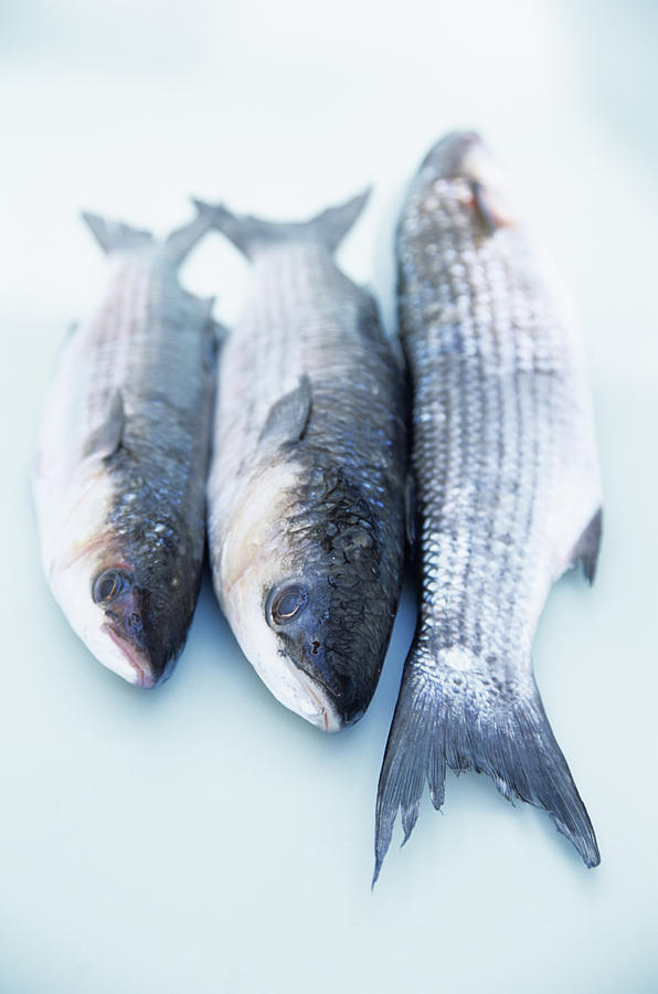 Grey Mullet Photograph - Grey Mullet by Veronique Leplat