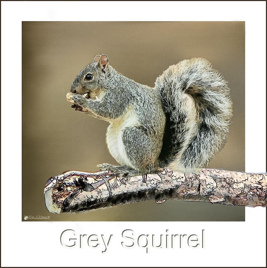 grey squirrel painting by tom schmidt