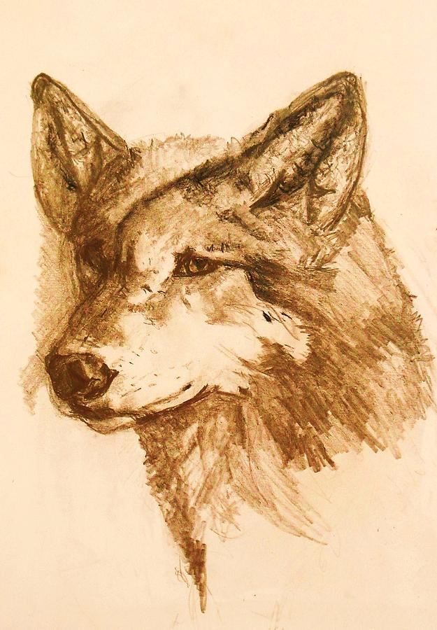 Wildlife Pastel - Grey Wolf by Deborah Gorga