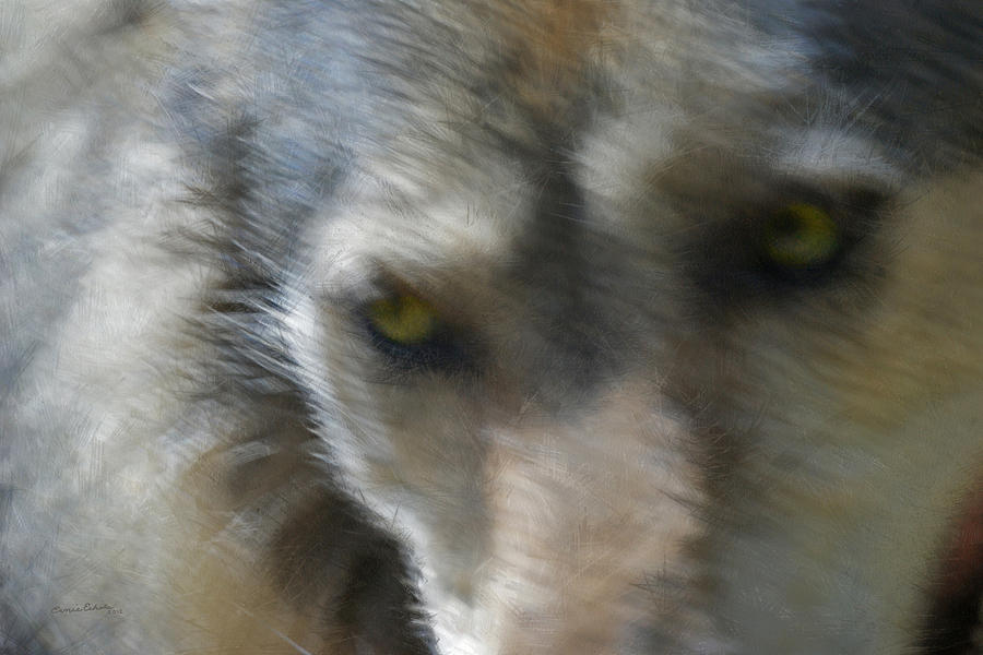 Wolf Digital Art - Grey Wolf Painterly by Ernie Echols