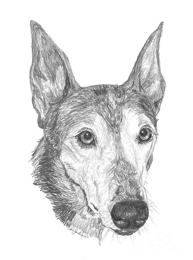 Greyhound Drawing - Greyhound by Deb Gardner