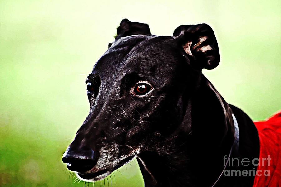 Greyhound Digital Art - Greyhound by The DigArtisT