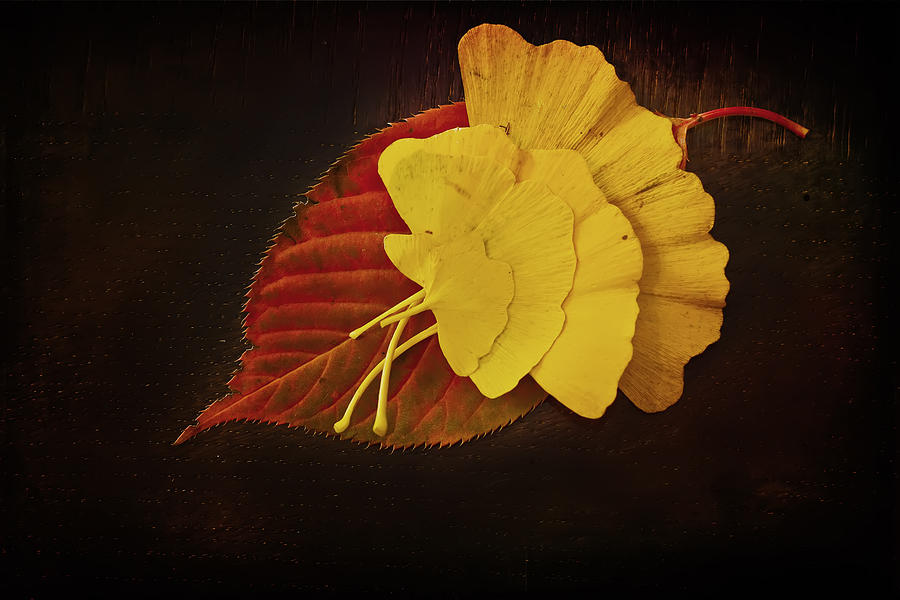 Texture Photograph - Group Leaf by Dmitriy Mirochnik