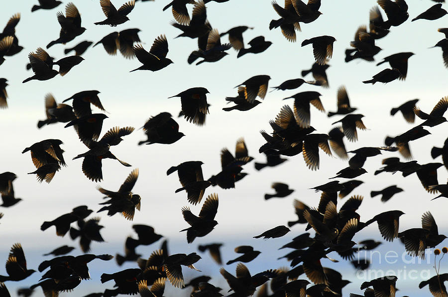 Birds Photograph - Group Photo by Dennis Hammer