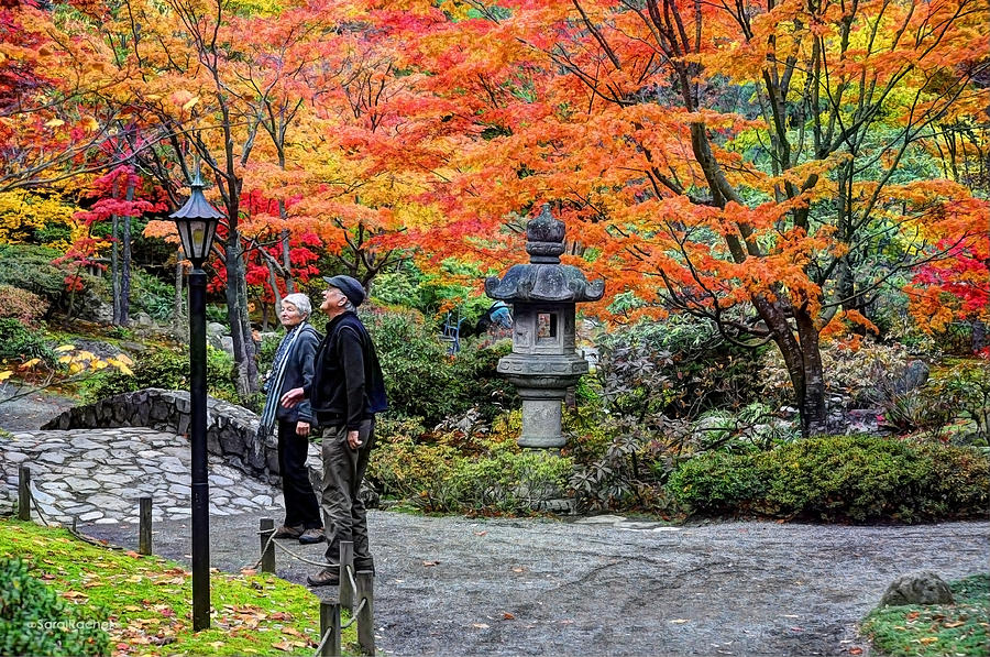 Japanese Garden Photograph - Growing Old Together by Sarai Rachel