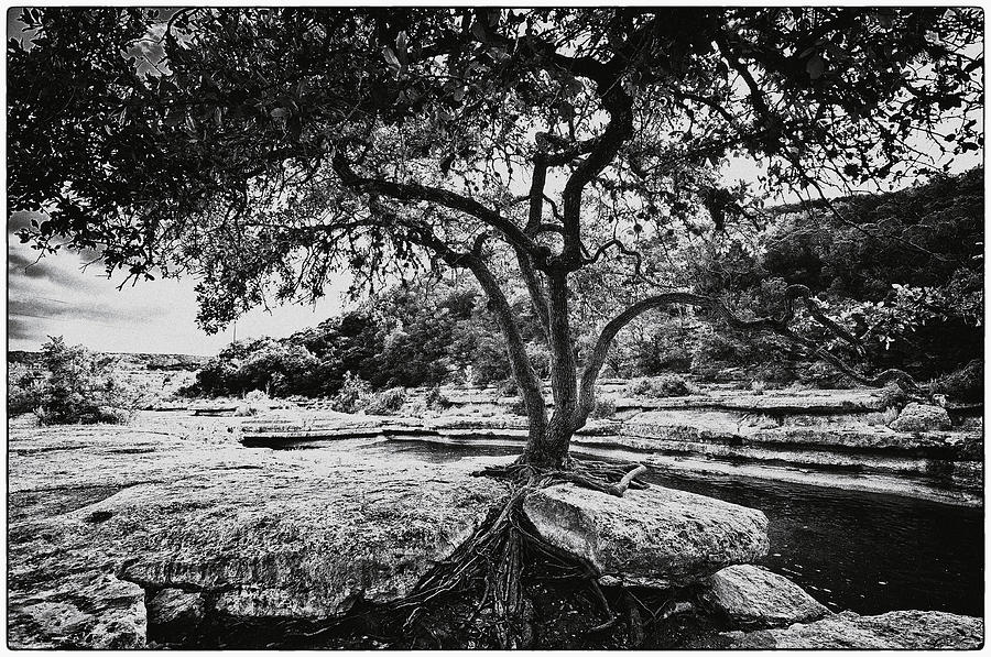 Still Life Photograph - Grown Into The Rock by Lisa  Spencer