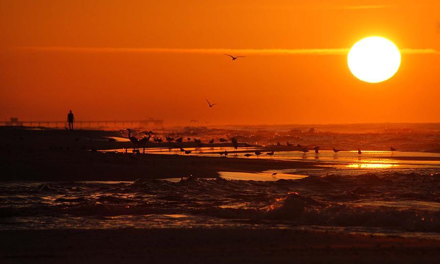 Pelican Digital Art - Gulf Coast Sunday Morning by Michael Thomas