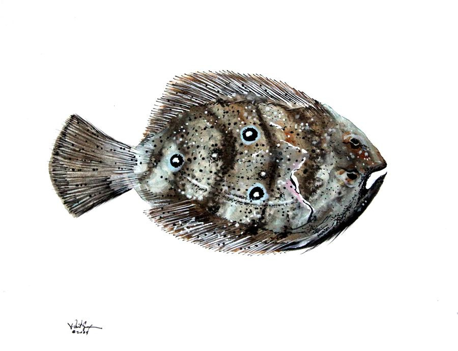 Flounder Painting - Gulf Flounder by J Vincent Scarpace