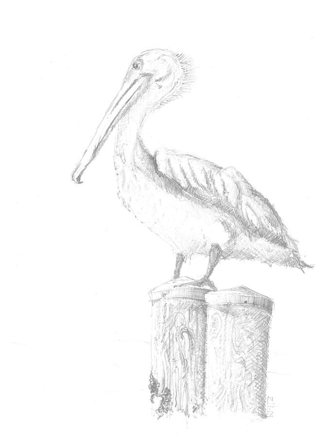 Gulf Shore Pelican Ricky Fitzpatrick on dog drawings for sale