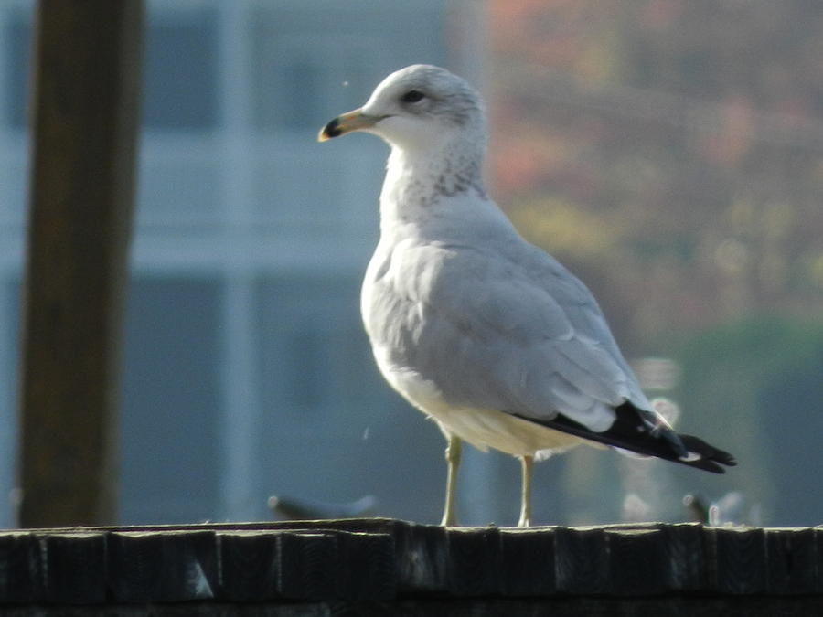 Bird Photograph - Gull Smiling by Dennis Leatherman