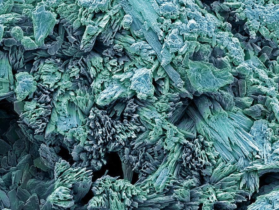 Gypsum Photograph - Gypsum Crystals, Sem by Steve Gschmeissner