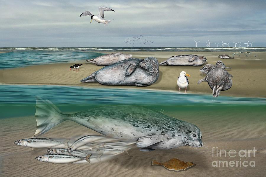 Habitat Common Seals  - Pinnipeds - Marine Mammals - Mudflat Tideland - Phoque Commun-banc De Sable Painting