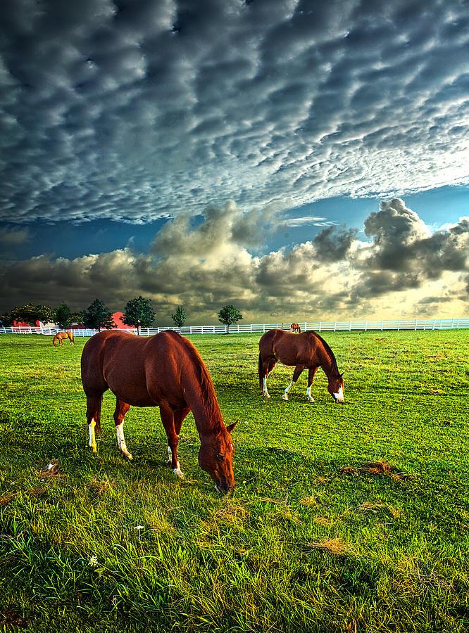 Horizons Photograph - Haileys Horses by Phil Koch