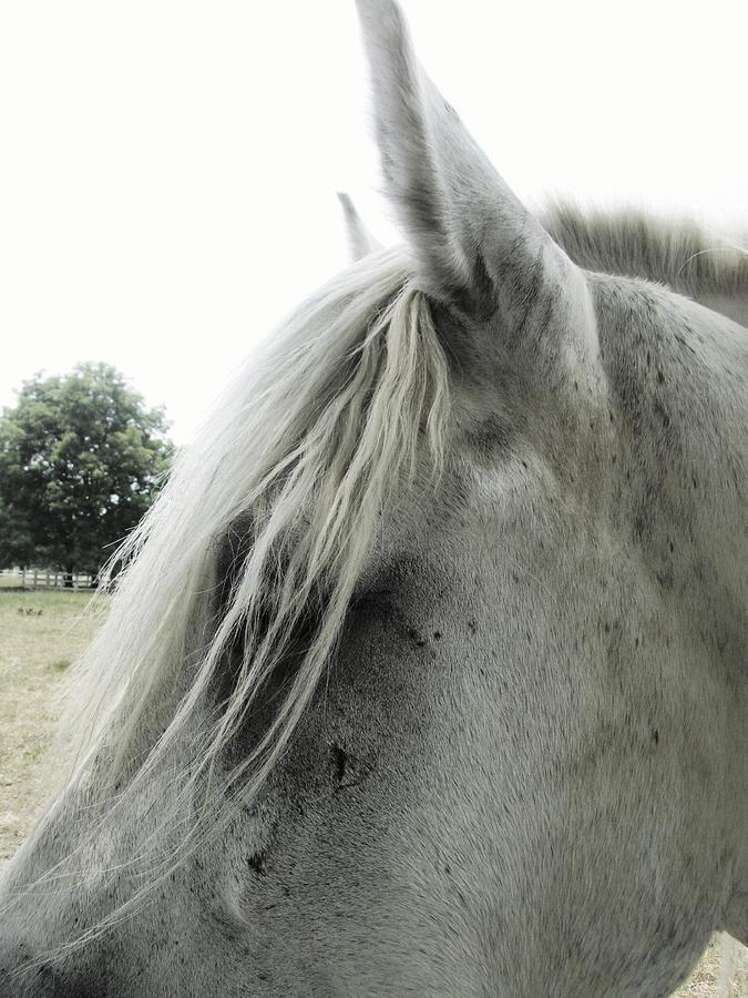 Horse Photograph - Hair Cut by Todd Sherlock