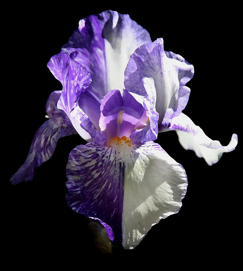 Iris Pyrography - Half And Half by Monika A Leon