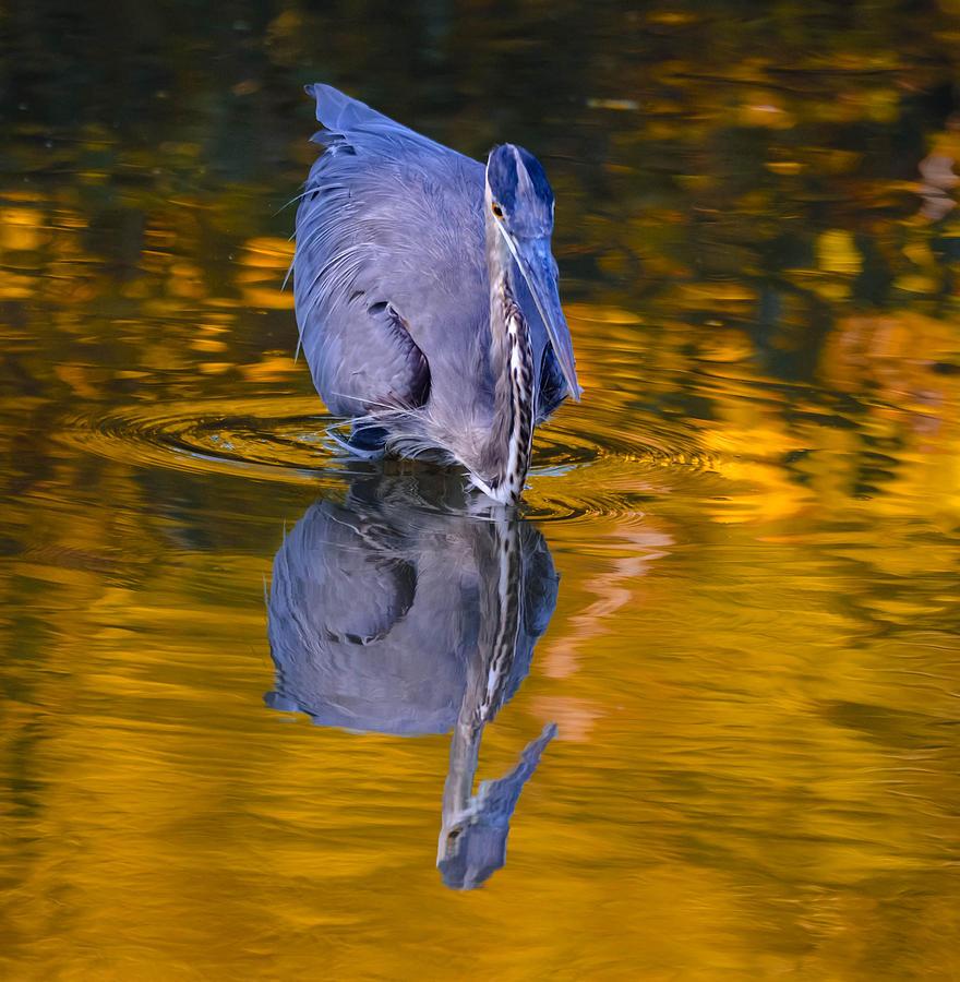 Halloween Heron Photograph by Brian Stevens