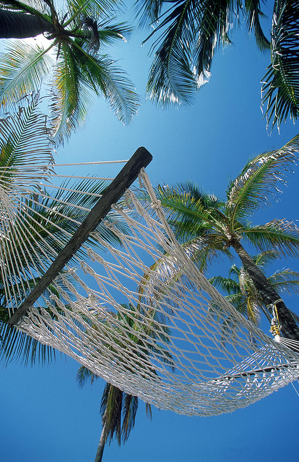Concept Photograph - Hammock And Palm Tree, Great Barrier by Ron Watts