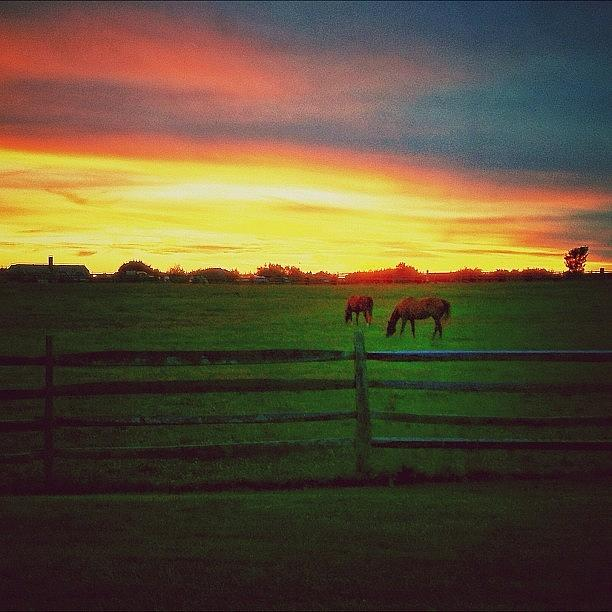 Horses Photograph - #hamptons #horses #sunset #summer by Evan Kelman