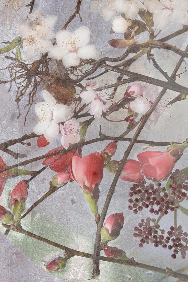 Floral Photograph - Hanami by Antonia and Fabio Duealberi