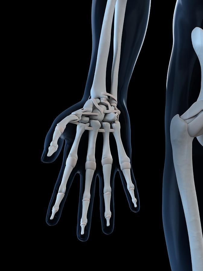 Hand Bones, Artwork Digital Art by Sciepro