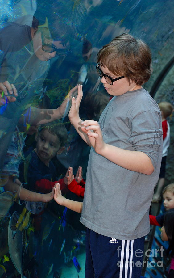 Aquarium Of The Pacific Photograph - Hands Across The Water by Andrea Simon