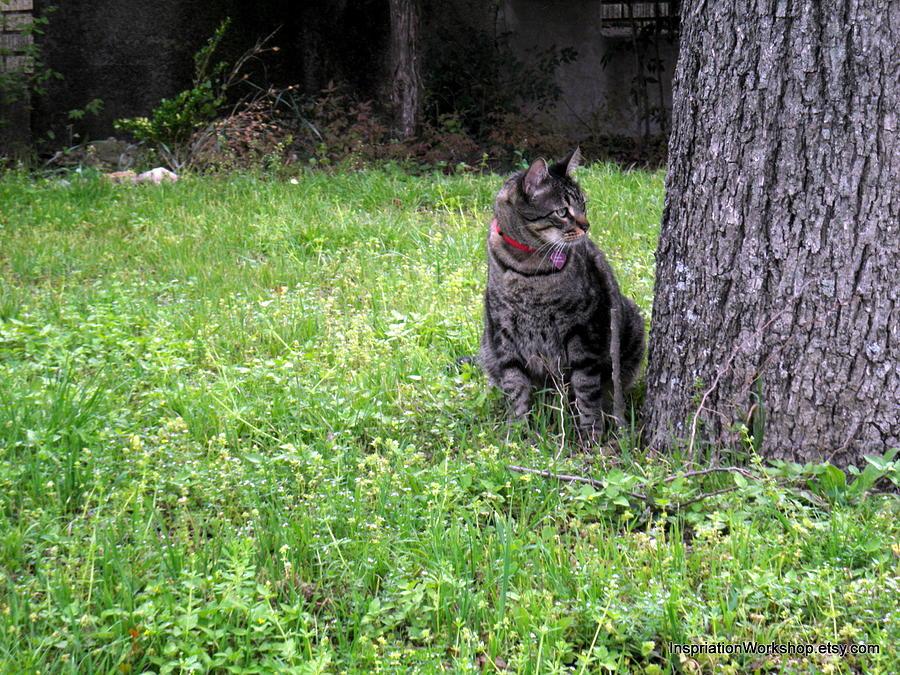 Cat Photograph - Handsome Boy by William  Bennett