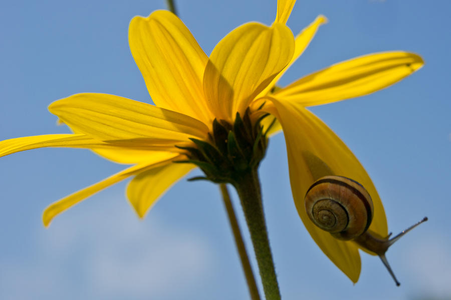 Snail Photograph - Hanging Around by Edward Myers
