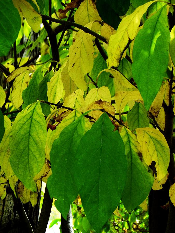 Leaf Photograph - Hanging Around  by Tricia  Mccoo
