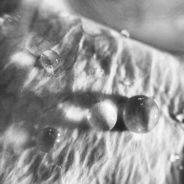 Hanging Drops On A Petal Photograph by Julieta Garcia