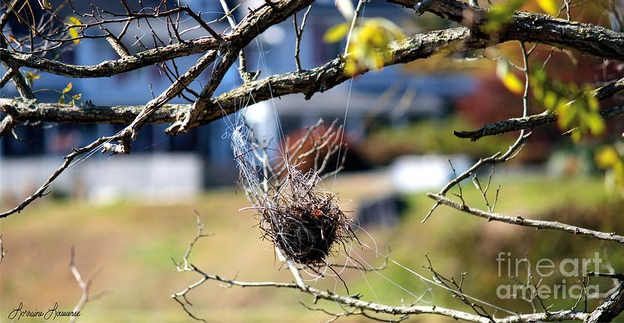 Bird Nest Photograph - Hanging On by Lorraine Louwerse