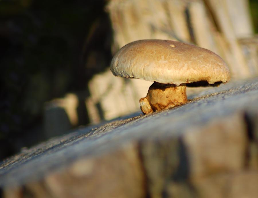 Mushroom Photograph - Hanging On by Wade Clark