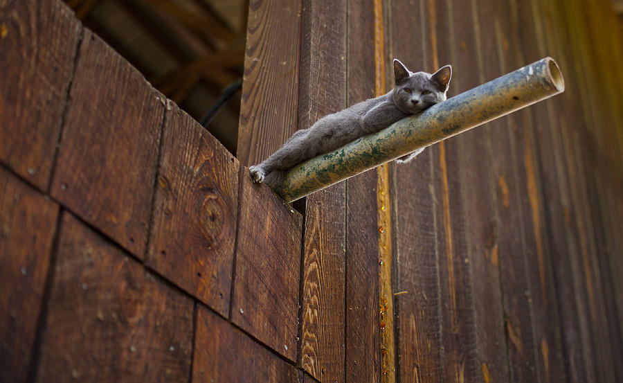 Cat Photograph - Hanging Out by James Massey