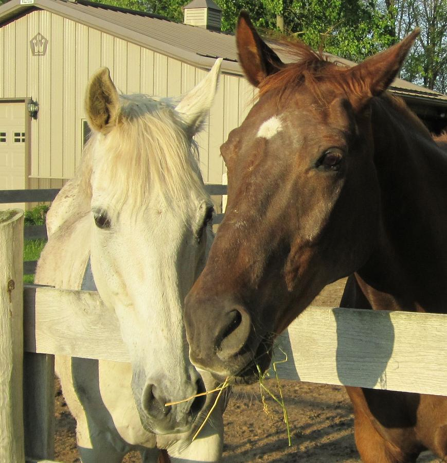 Equine Photograph - Hanging Out by Kristine Bogdanovich