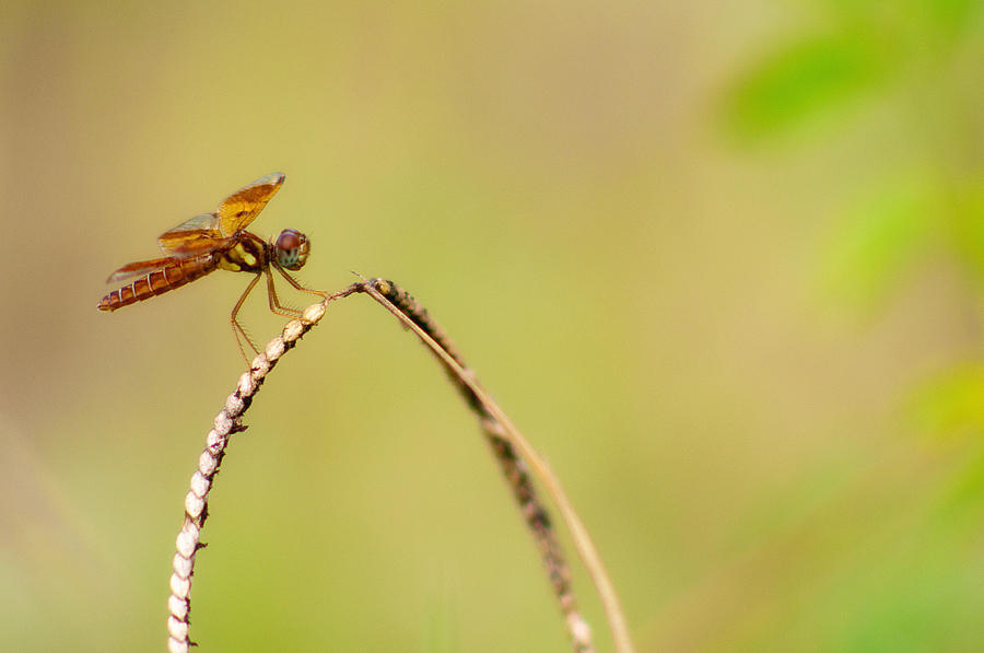 Dragonfly Photograph - Hanging Out by Rita Fuller