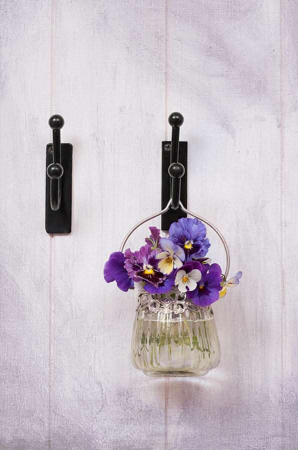 Pansies Photograph - Hanging Pansies by Amanda Elwell