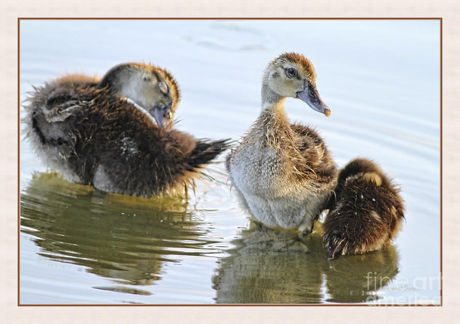 Ducklings Photograph - Hanging With The Buds by Deborah Benoit
