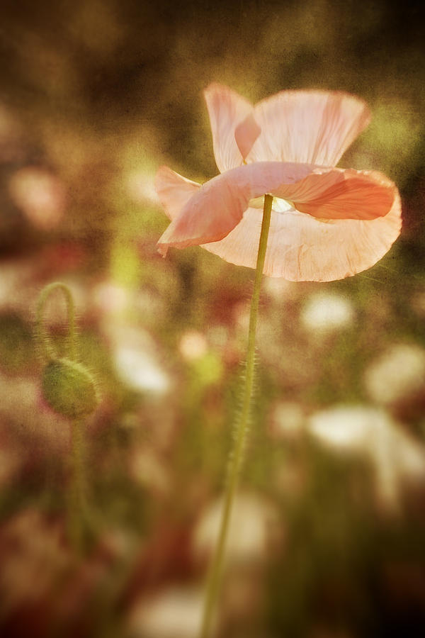 Poppy Digital Art - Happiness by Diane Dugas