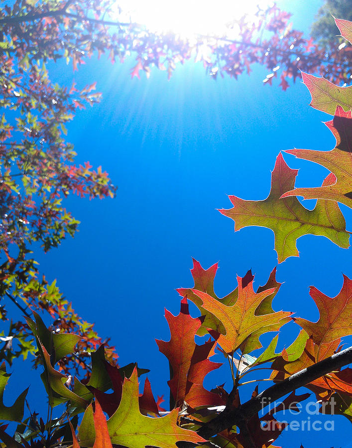 Sky Photograph - Happy Autumn by CML Brown