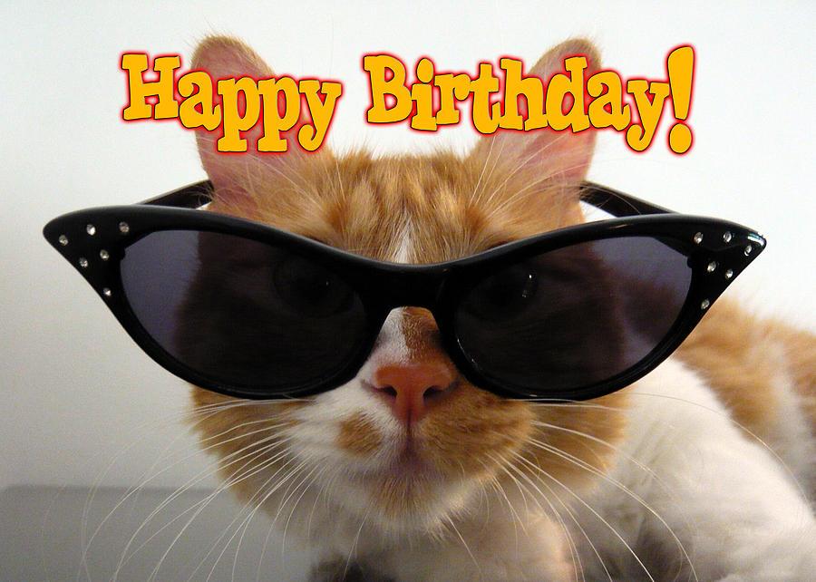 Старый, картинки с днем рождения прикольные кошки