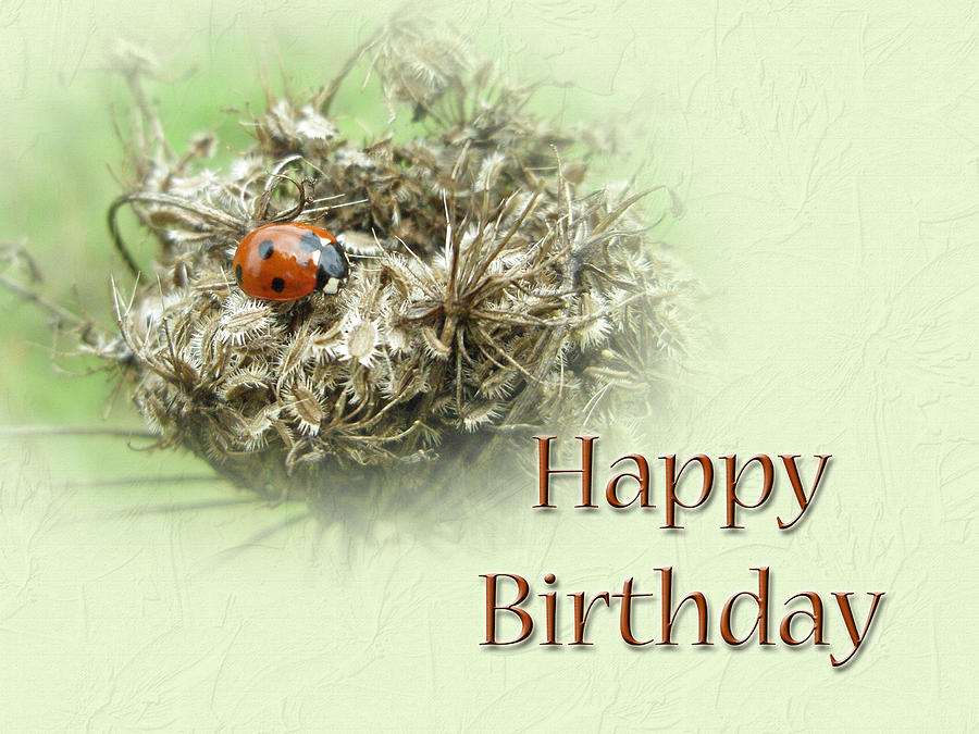 Happy Birthday Greeting Card Ladybug On Dried Queen Annes Lace – Nature Birthday Card